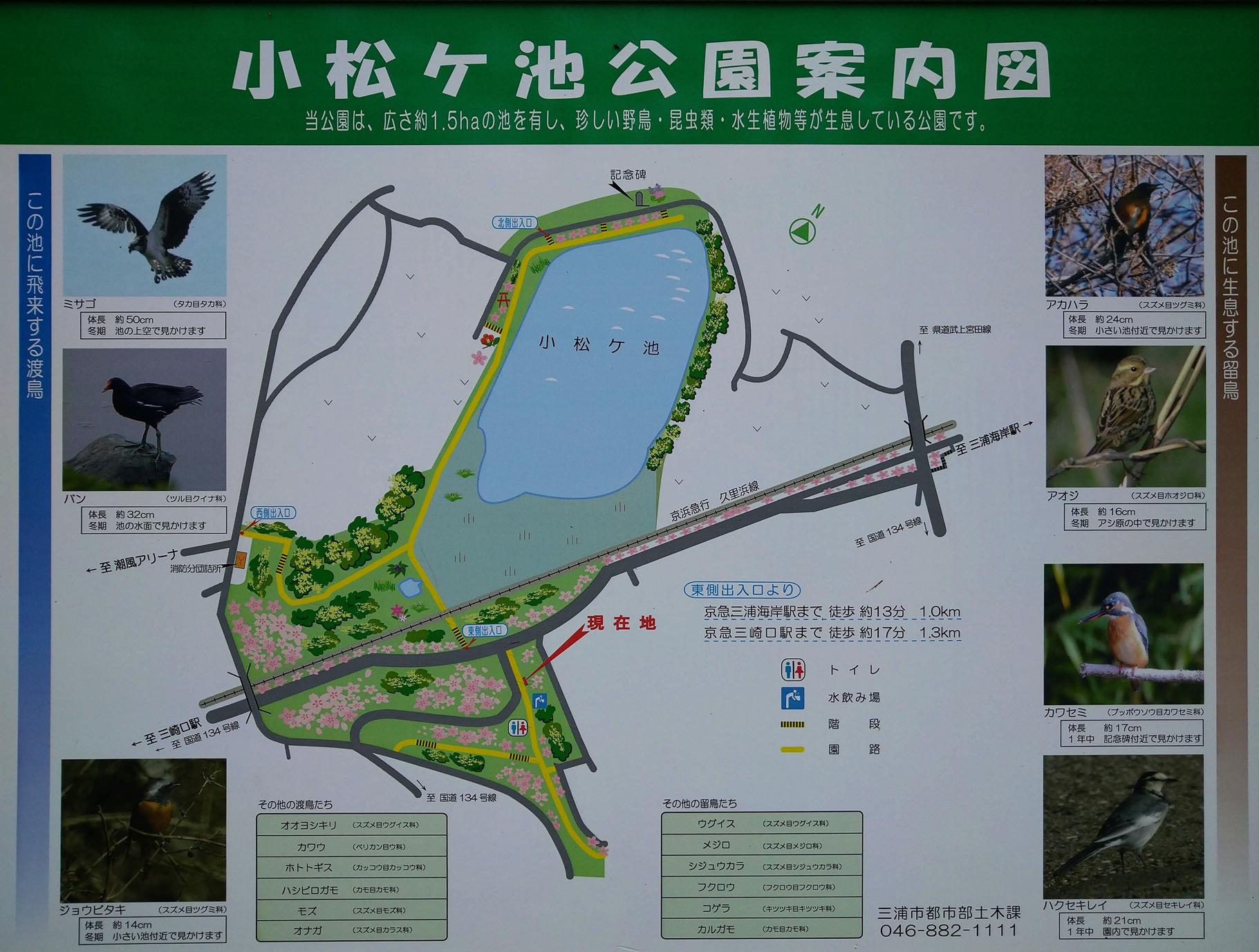 小松が池MAP2