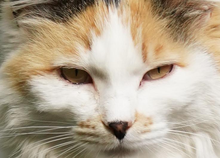 猫の等倍写真