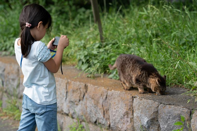 観音崎の猫と娘