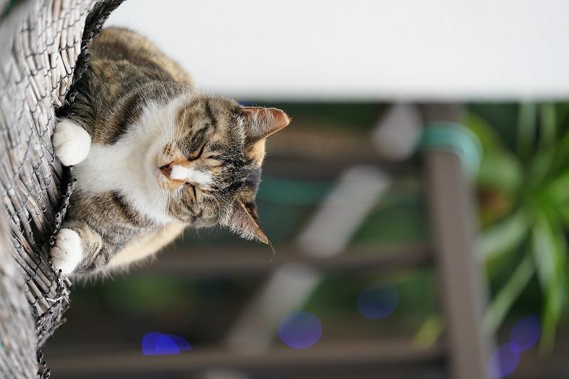 近所の猫ちゃんお昼寝中