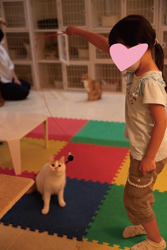 猫カフェで遊ぶ愛娘